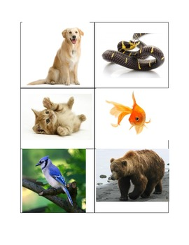 Spanish Animals with Photos