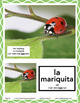 Spanish In April Lesson & CD (Ages 2-10)
