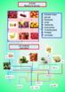 Spanish food worksheet, la comida for beginners