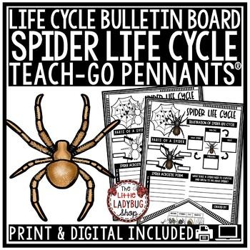 Spider Life Cycle Activity • Teach-Go Pennants