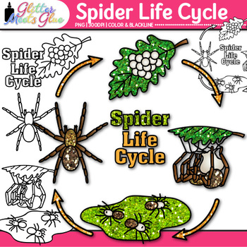 Spider Life Cycle Clip Art - Animal Groups, Insects, Bugs