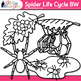Spider Life Cycle Clip Art {Great for Animal Group, Insect