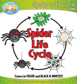 Spider Life Cycle Clip Art Set — Comes In Color and Black