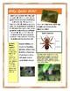 Spider Web Craft & Mini Unit Study