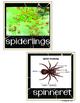 Spider Writing Center