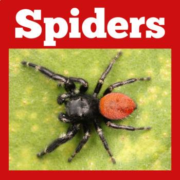 Spiders PowerPoint | Spiders Activities | Spiders Science