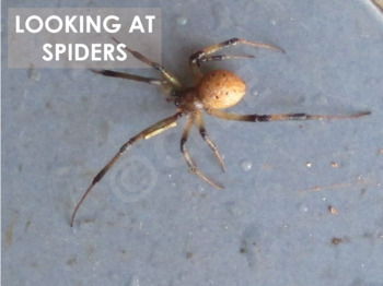Spiders - Interactive PowerPoint presentation