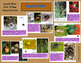 Spiders – What Makes a Spider a Spider (Nonfiction Science
