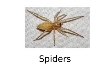 """Spiders """"can"""" """"have"""" """"are"""" story"""