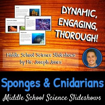 Sponges and Cnidarians: A Life Sciences Slideshow!