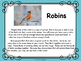 Spring: Robins Reading for Upper Elementary Grades and Bui