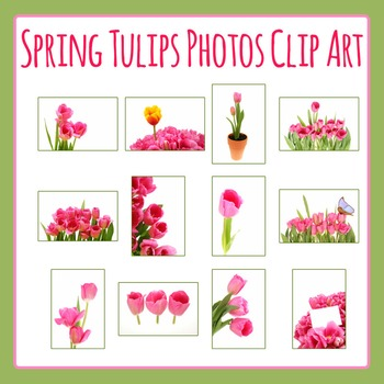 Spring Tulips Photo / Photograph Clip Art Set for Commercial Use
