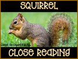 Close Reading-Squirrel
