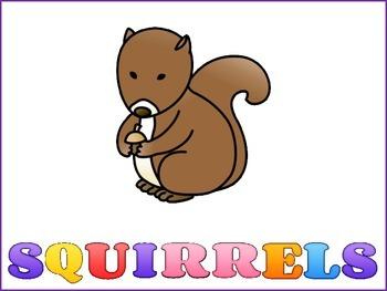 Squirrels Graphic Organizers