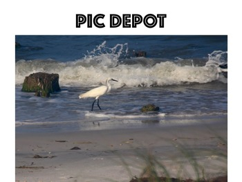 Stock Photo Shoreline Bird Nature