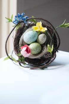 Stock Photo Styled Image: Birds Nest -Personal & Commercial Use