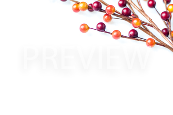 FREEBIE! Stock Photo Styled Image:Fall Berries #3 -Persona