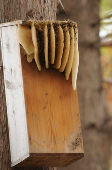 Stock Photo: Honeycomb for Bees -Personal & Commercial Use