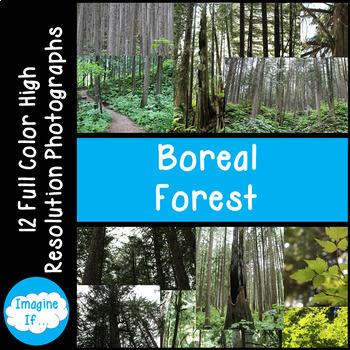 Stock Photos-Boreal Forest