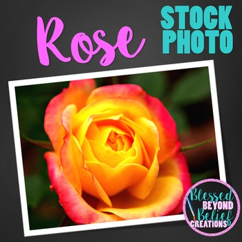 Flower Stock Photo ◆ Yellow and Red Rose Stock Image ◆ Ros