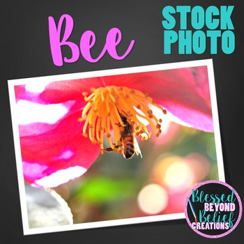 Flower and Bee Stock Photo ◆ Flower and Bee Stock Image ◆
