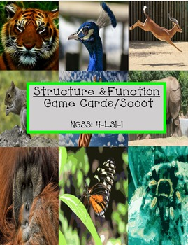 Structure & Function Scoot Game