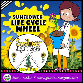Plant Life Cycle Activities (Sunflower Life Cycle Craft)