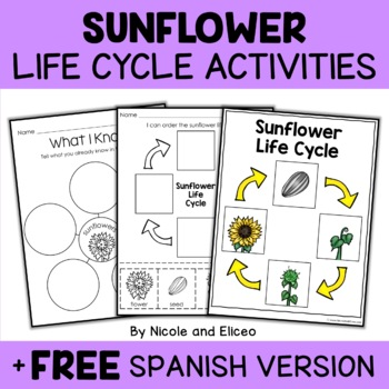 Sunflower Life Cycle Activity