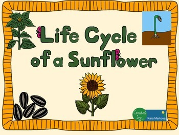 Sunflower Life Cycle Wheel & Teaching Cards