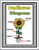 Sunflower Life Cycle Science and Literacy  - Sunflowers Un