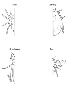 Symmetry Worksheet: Insect Drawing!