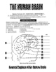THE HUMAN BRAIN . . . How It Works-28-Pages & 3-DAYS of HA