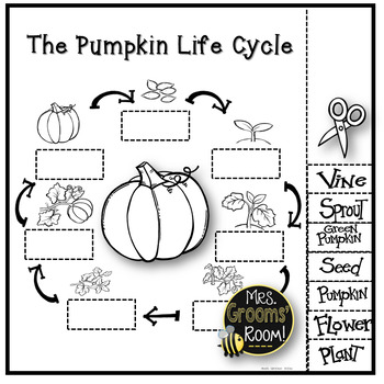 3 FREE Life Cycle of a Pumpkin Printable Worksheets!