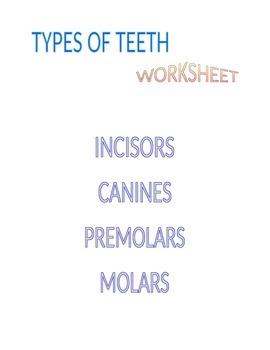 Types of Teeth Worksheet