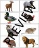 Tacting Animals