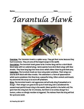 Tarantula Hawk - Spider Wasp Informational article lesson