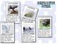 Tarjetas con datos de animales  del ártico