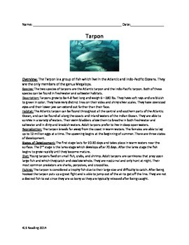 Tarpon - Trophy Fish - Review Article Vocabulary Activity