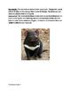 Tasmanian Devil - informational article lesson with questi