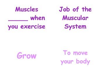 Teaching Muscles in P.E.: Kindergarten & First Grade Vocab
