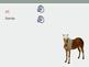 Teaching Uzbek - Farm Animals