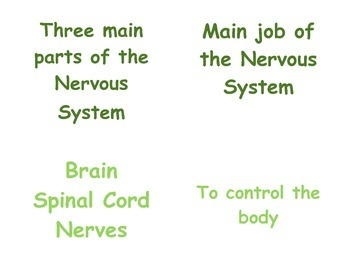 Teaching the Nervous System in P.E.: 4th & 5th Grade Vocab