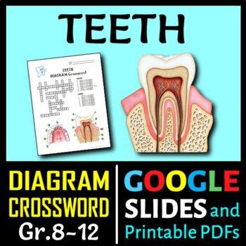Teeth Crossword with Diagram {Editable}
