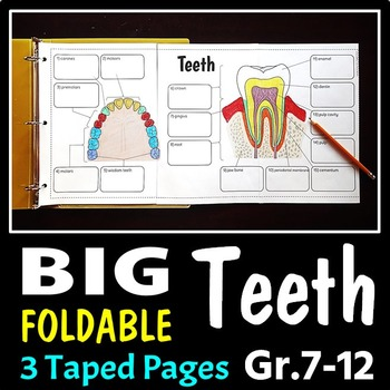 Teeth Foldable - Big Foldable for Interactive Notebooks or
