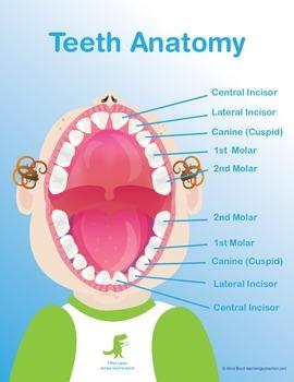 Teeth Poster - School Nurse