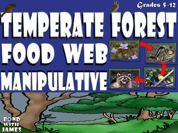 Food Chain and Food Web: Temperate Forest Card Sort