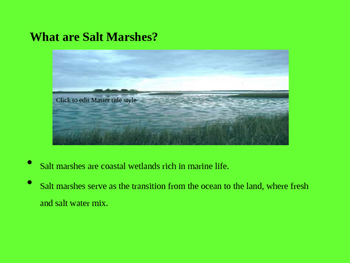 Texas Salt Marshes PPT Editable