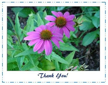 Note Cards: Thank You