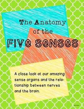 The Anatomy of the Five Senses