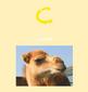 The Animal Alphabet Song